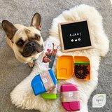 Ajaa brotbox, PLA lunchboxen BPA en Melamine vrij
