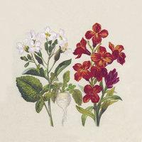 Naturals servet Botanical, 33x33cm gerecycled/ongebleekt
